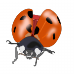 The Bug And The Poor Flea- Children's Story With Morals
