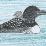 Little Loons- a story and guided meditation