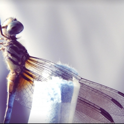 How a dragonfly's brain is designed to kill | Greg Gage
