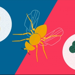 How you can make a fruit fly eat veggies | Greg Gage