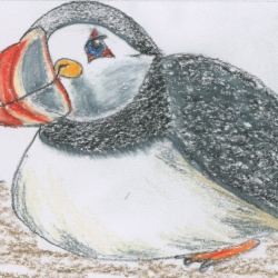 Puffin Fun- a story and guided meditation