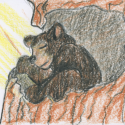 A Black Bear's Bed- a story and guided meditation for kids