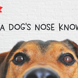 A Dog's Nose Always Knows