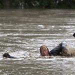 சீனாவில் வெள்ளத்திற்கு 34 பேர் பலி, 93 பேரை காணவில்லை | Floods in China leave 34 dead, 93 missing