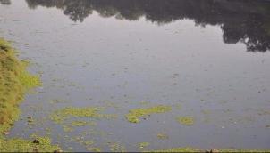ஆறுகளை பாதுகாக்காத மகாராஷ்டிர அரசுக்கு ரூ.100 கோடி அபராதம் | SC orders state to pay Rs 100 crore for polluting 2 rivers