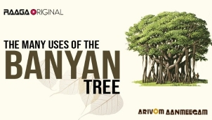 The Many Uses of the Banyan Tree