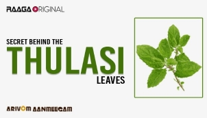 Secret behind the thulasi leaves